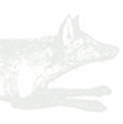 head shot of fox